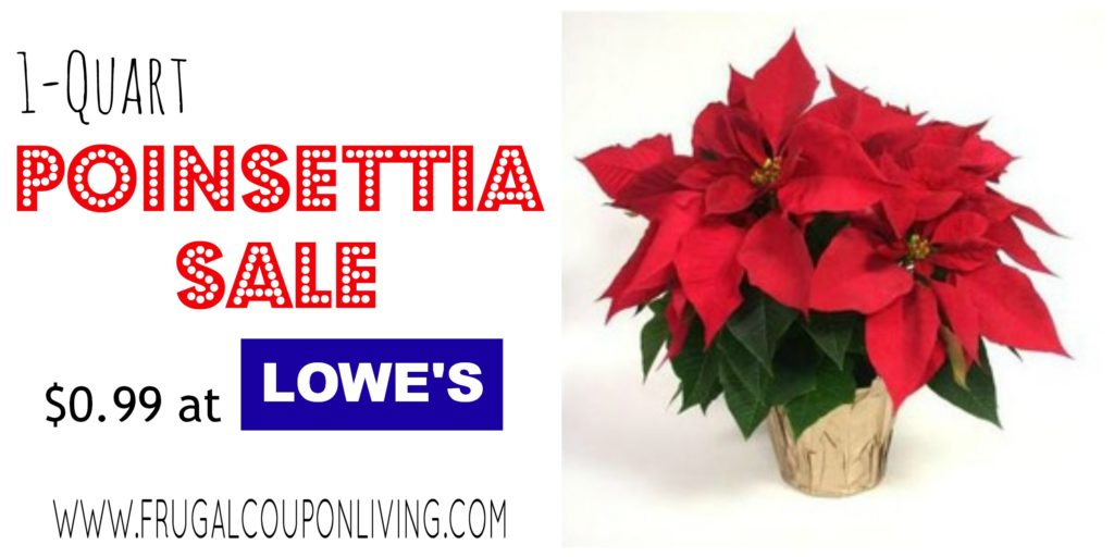LOWES-black-friday-poinsettia-sale