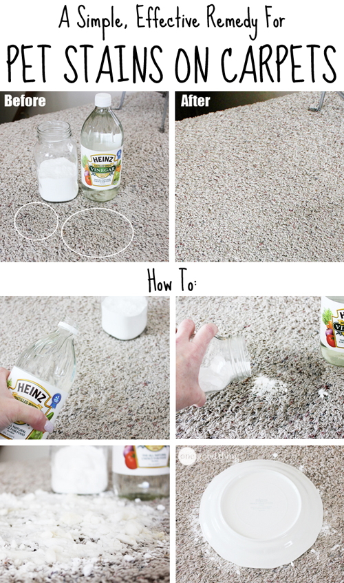 Pet-Carpet-Stains-1