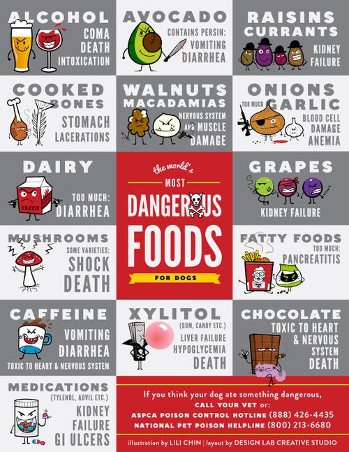 dog-chart-dangerous-foods