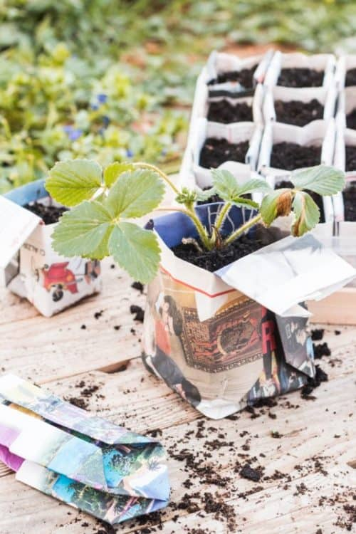 Gardening Hacks and Tips for the Wannabe Gardener