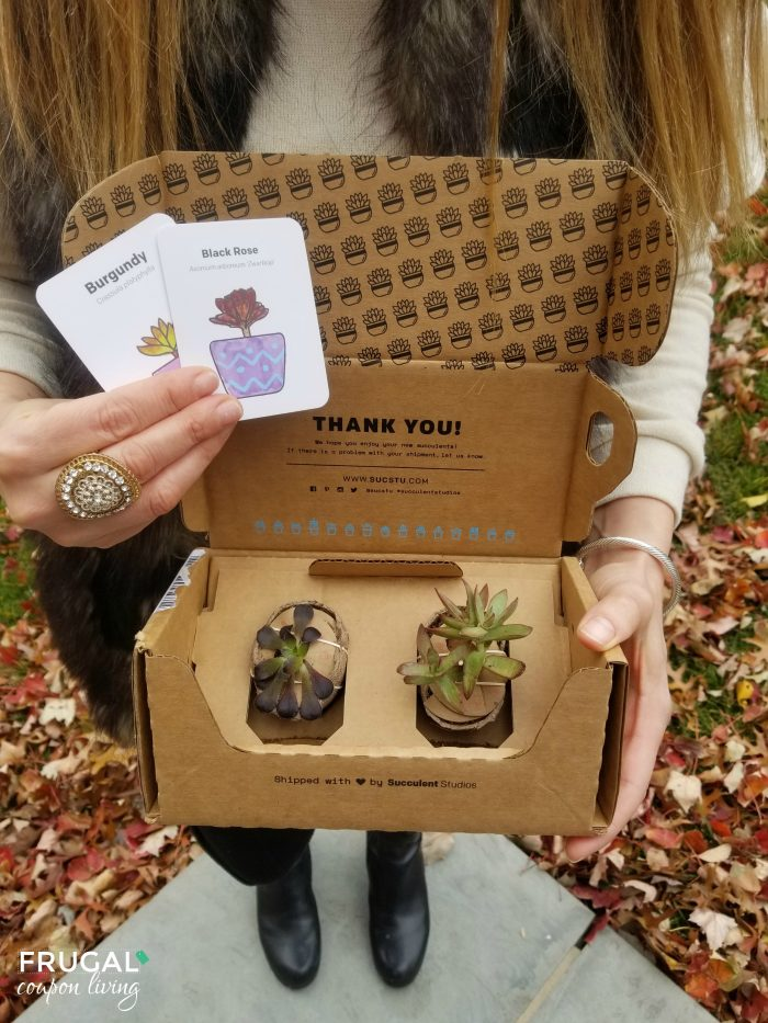 succulent studios subscription box