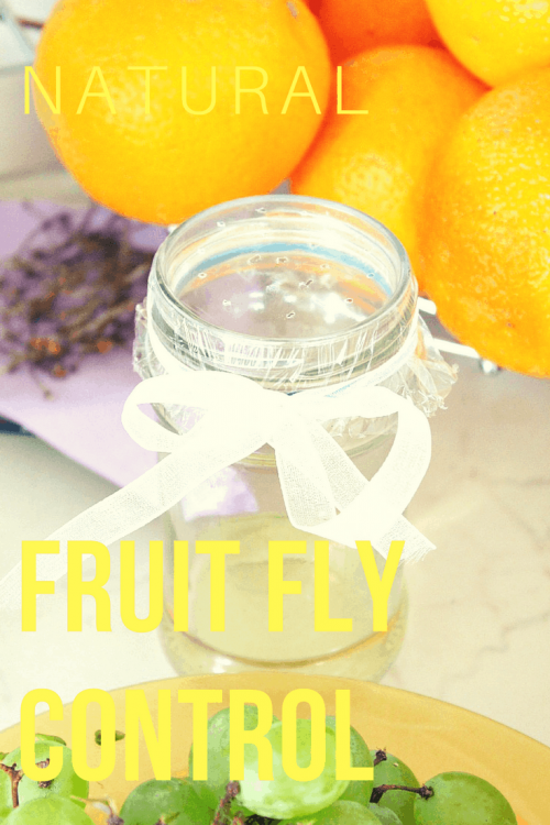 Homemade Fruit Fly Cleaner