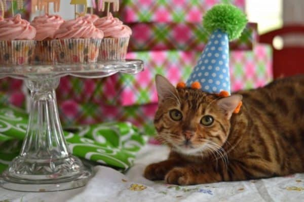 How to Make a Cat Birthday Party Hat