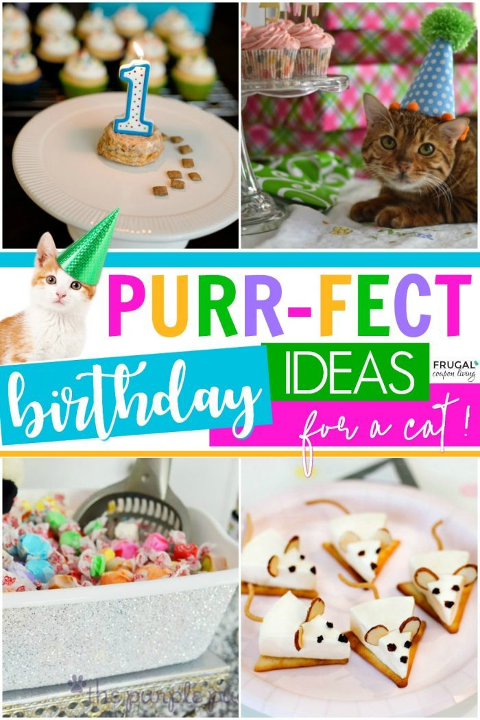 Cat Birthday Party Ideas for a Pet